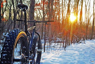 fatbike in woods with sunshine