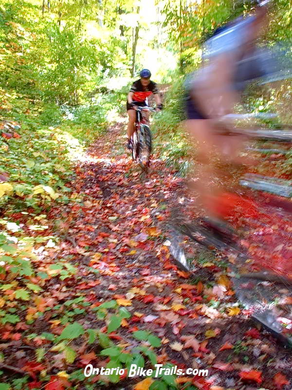 Haliburton forest mtb trail ontario bike trails rock washout fandeluxe Images