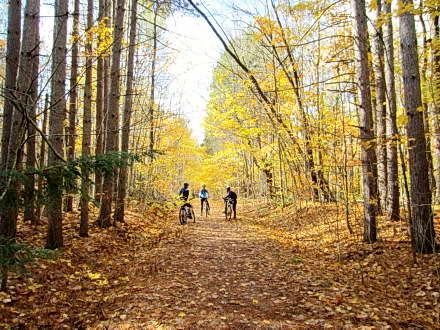 Copeland Forest – MTB Trail