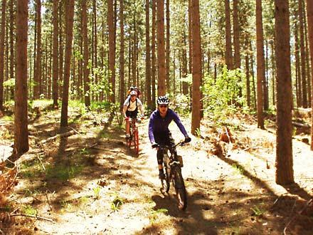 Eldred King – MTB / Park Trail