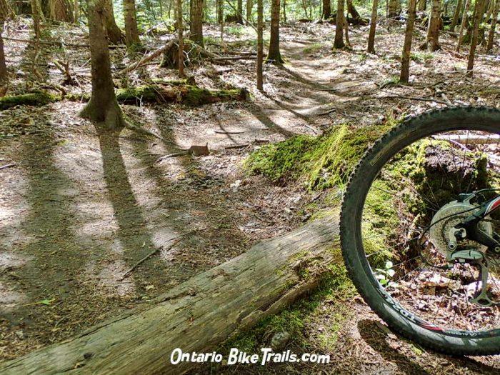 1b3353ab4cf hiking path. Hiawatha MTB trail. Hiawatha MTB trail. old log jump