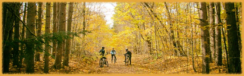 3 mtb riders in the woods